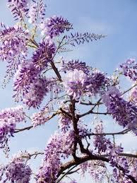 Flores de miel