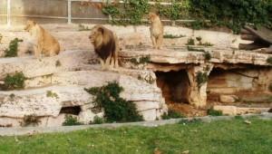 """Hombre herido en el Zoo y prensa """"imparcial"""""""